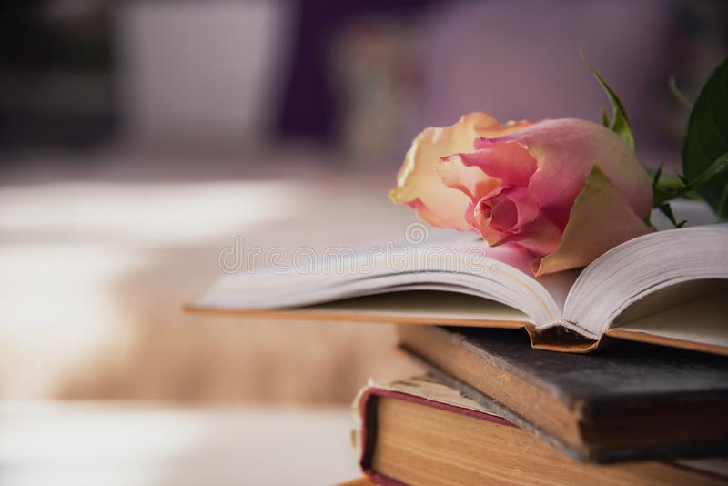 Pink rose on bunck of books. royalty free stock photo