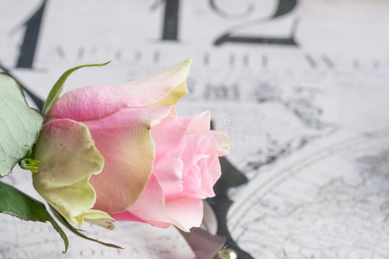 Pink rose on a clock face, clock hands.  stock image