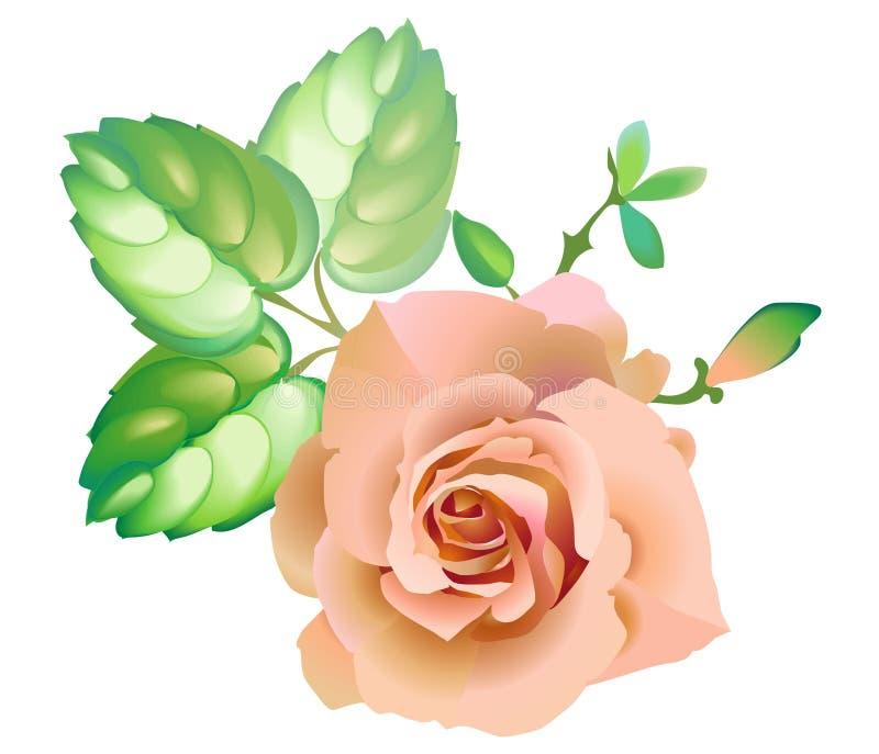 Pink_rose_flower ilustracji