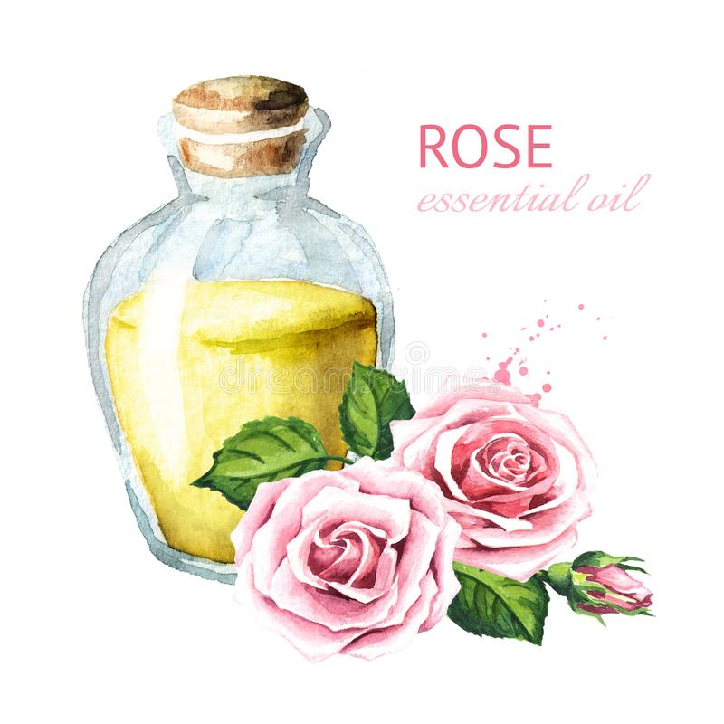 Pink rose flower and essential oil. Spa and aromatherapy. Watercolor hand drawn illustration, isolated on white background. stock illustration