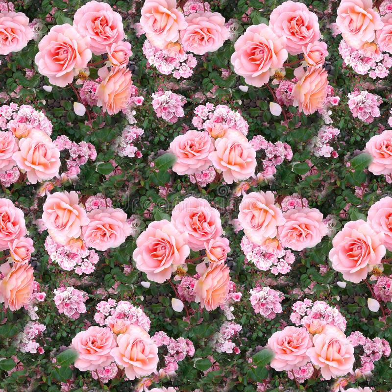Pink rose flower garden grass summer nature seamless pattern texture background stock images