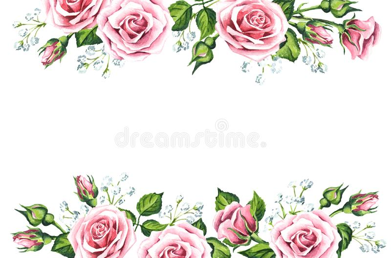 Pink rose flower and gypsophila background. Watercolor hand draw stock illustration