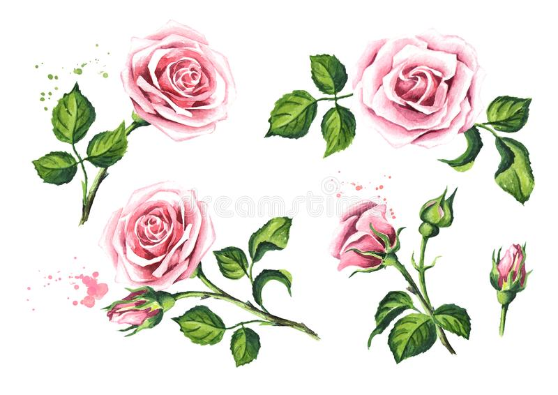 Pink rose flower set. Design elements for cards, invitations and textile. Watercolor hand drawn illustration, isolated on white b stock illustration