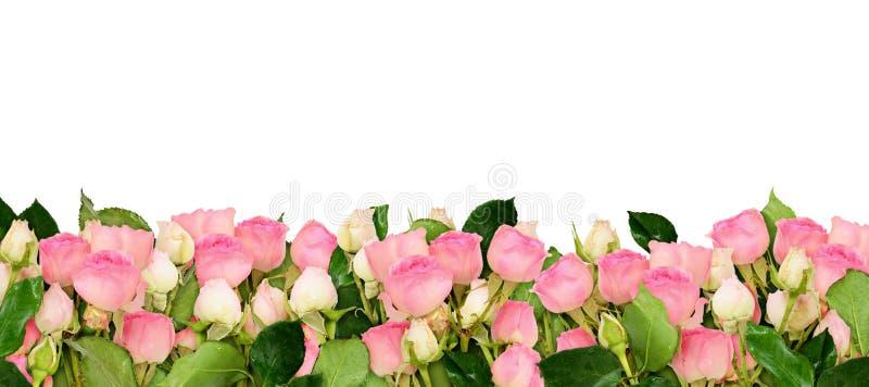 Pink rose flowers border royalty free illustration
