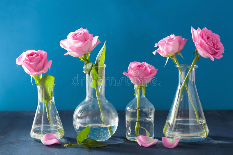 Pink rose flowers in chemical flasks over blue stock photography