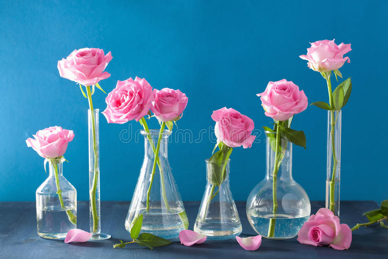 Pink rose flowers in chemical flasks over blue stock photo
