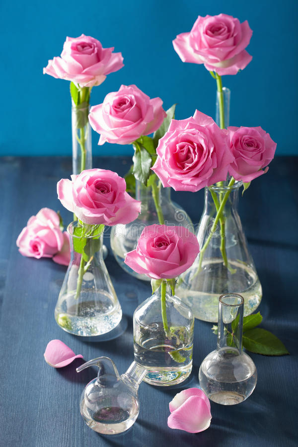 Pink rose flowers in chemical flasks over blue stock image
