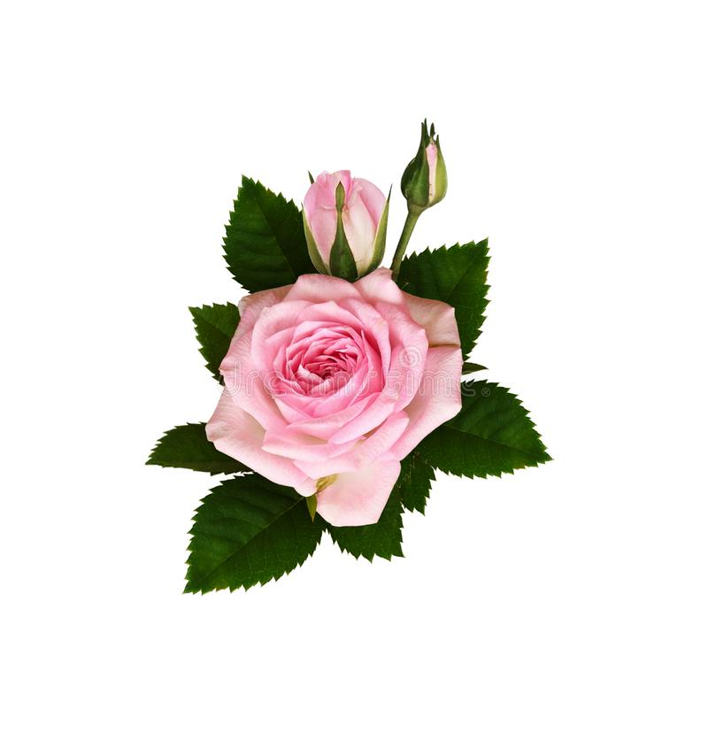 Pink rose flowers with green leaves in a floral  arrangement stock illustration