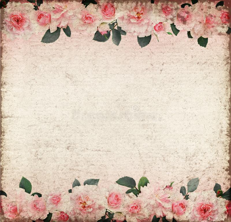 Pink rose flowers and leaves on old paper vector illustration