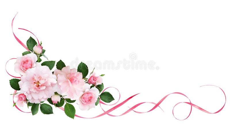 Pink rose flowers, satin ribbons and glitter confetti in a flora vector illustration
