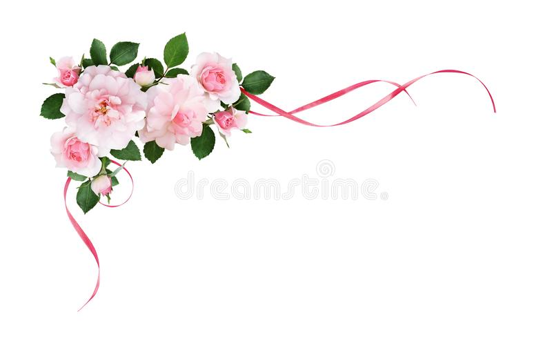 Pink rose flowers and silk waved ribbons in a corner arrangement. Isolated on white background vector illustration