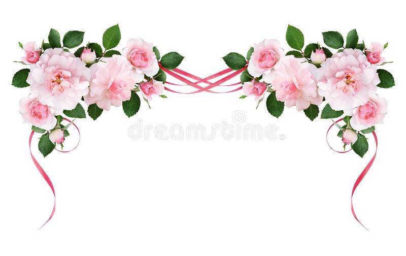 Pink rose flowers and silk waved ribbons in a floral arrangement. Isolated on white background royalty free illustration