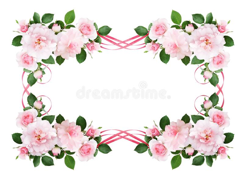 Pink rose flowers and silk waved ribbons in a floral frame stock illustration