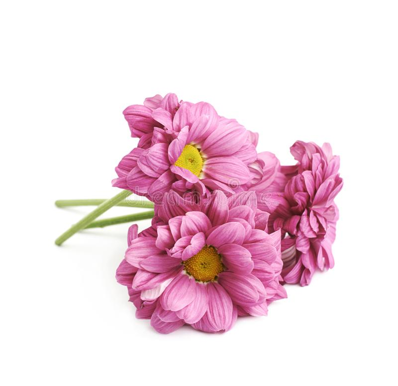 Gerbera flower isolated royalty free stock image