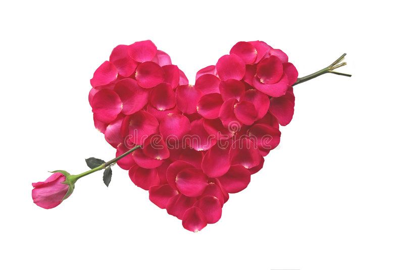Pink Rose Heart with rose arrow royalty free stock photo