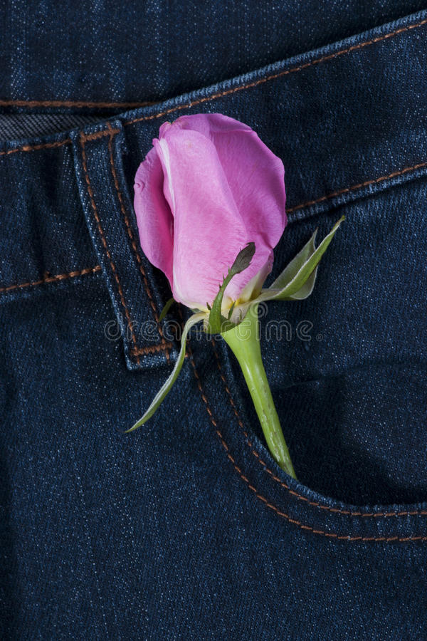 Download Pink Rose In The Jean Pocket Stock Image - Image: 26526081