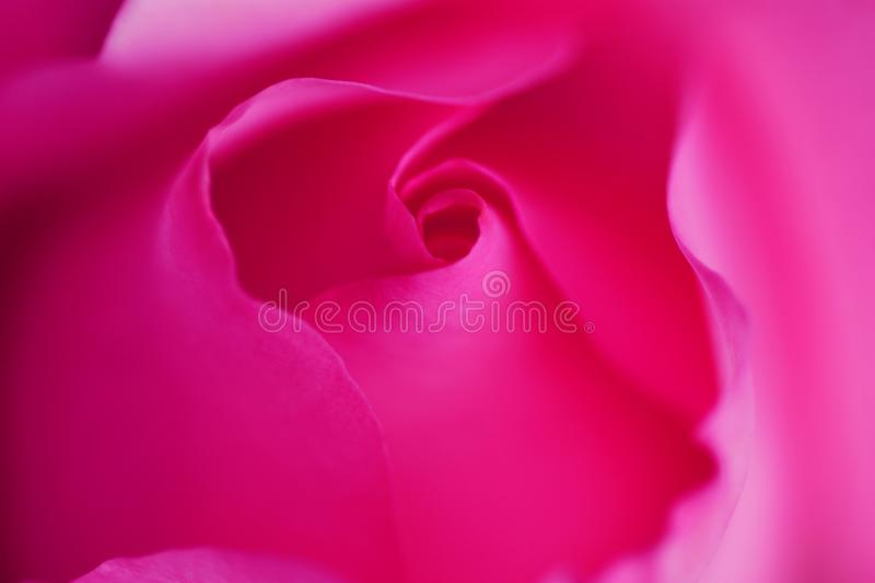 pink rose Knopp rosa silk abstrakt bakgrund Delikata kronblad Romantisk mood abstrakt bakgrund arkivbild