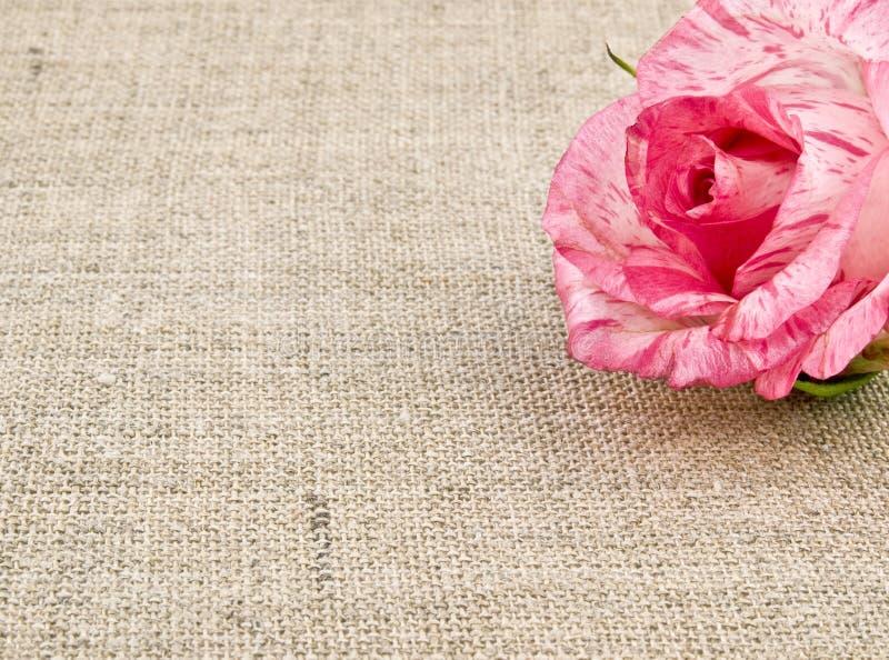Pink rose on linen background