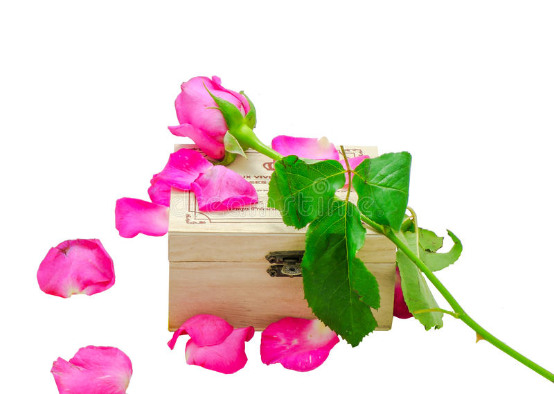 Pink rose on little wooden box royalty free stock photography