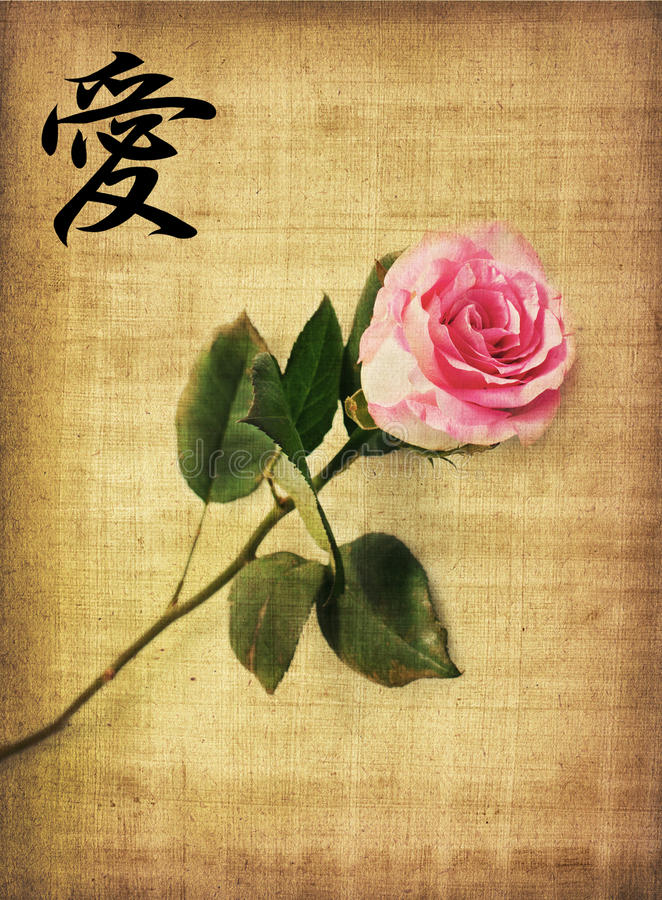 Pink rose on old paper royalty free stock photo