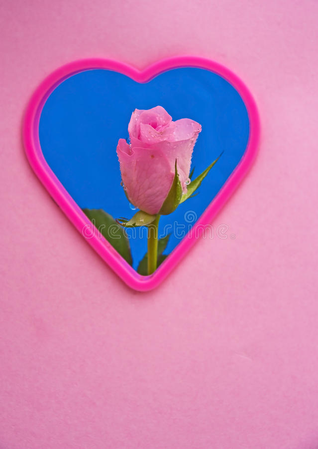 Download Pink rose for perfect love stock image. Image of rain - 38173647
