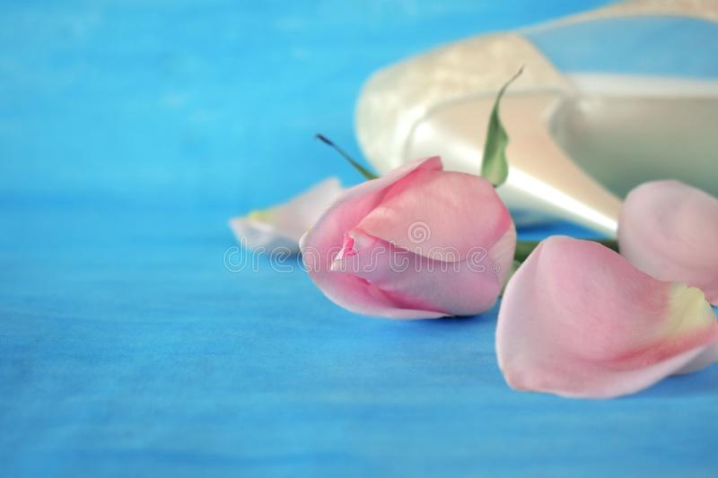 Pink rose, petals and white high heel shoe royalty free stock image