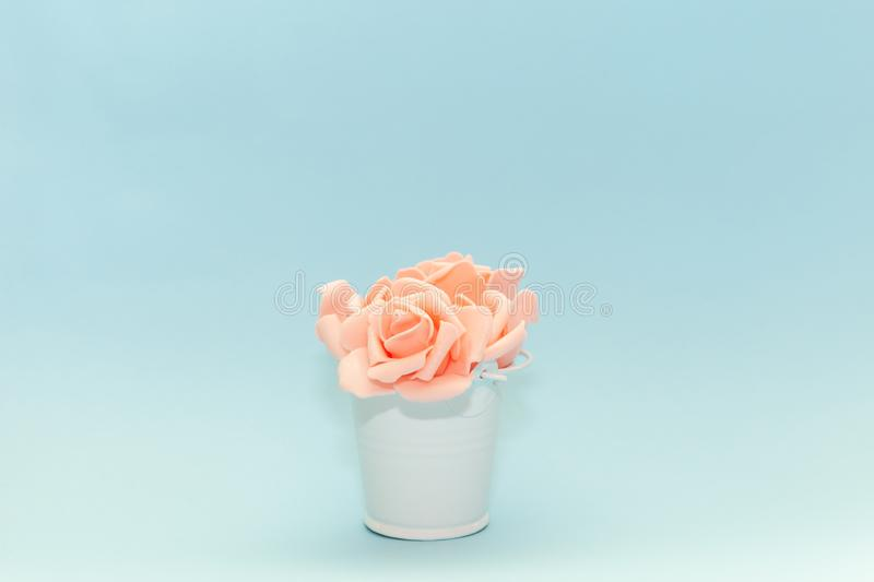 Pink rose petals in a white toy pail on a light blue background, flowers for the holiday of March 8 or February 14, women`s day royalty free stock images