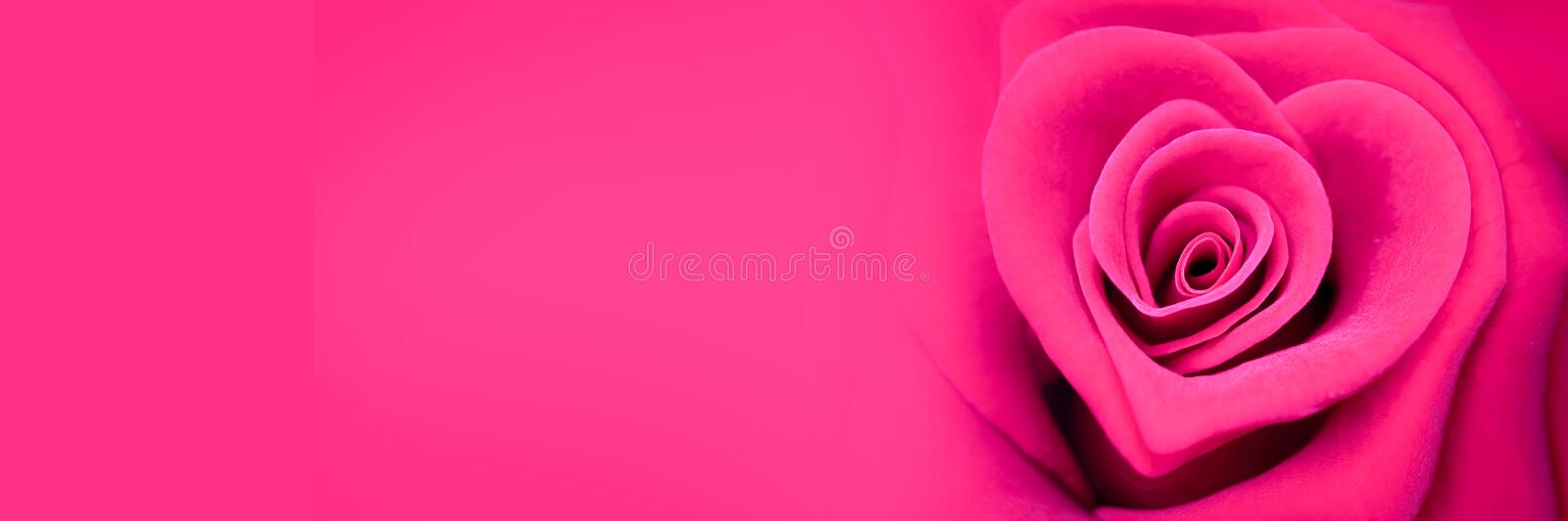 Pink rose in the shape of a heart, valentines day banner royalty free stock photography