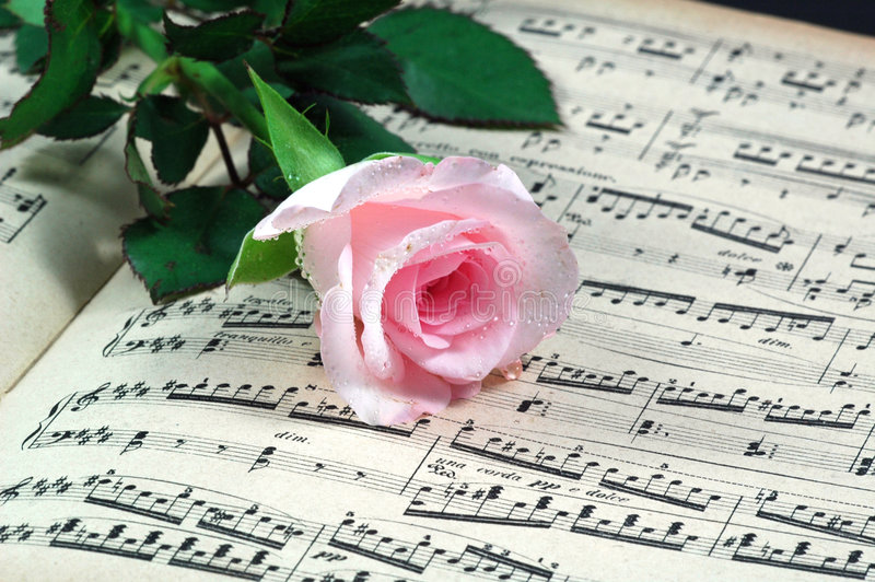 Pink rose and sheet music royalty free stock photo