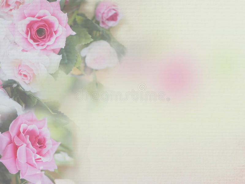 Pink rose soft style royalty free stock photo