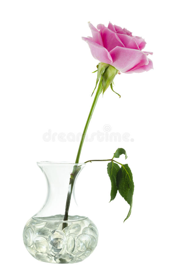 Download Pink Rose in a Vase stock image. Image of beauty, white - 37687629