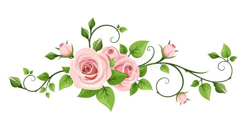 Pink rose vine. Vector illustration. Vector pink rose vine on a white background