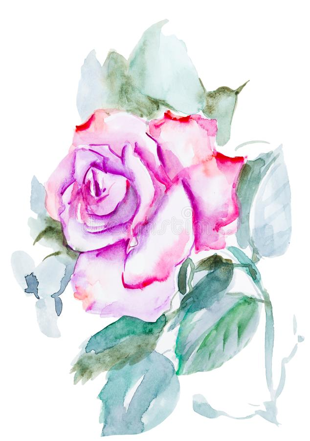 Pink rose watercolor hand-painted, isolated on white royalty free illustration