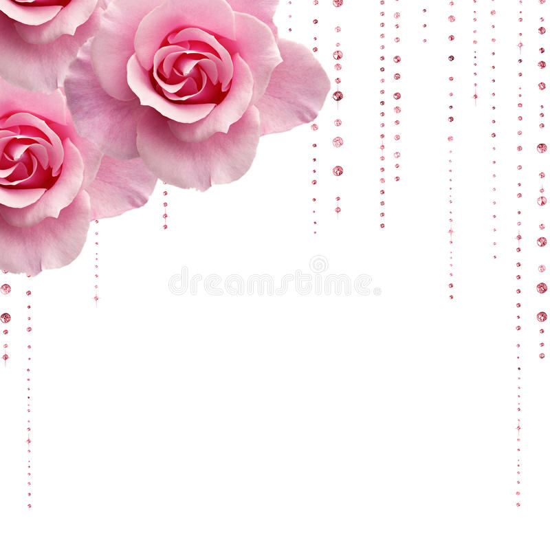 Free Pink Roses Stock Photos - 13134343