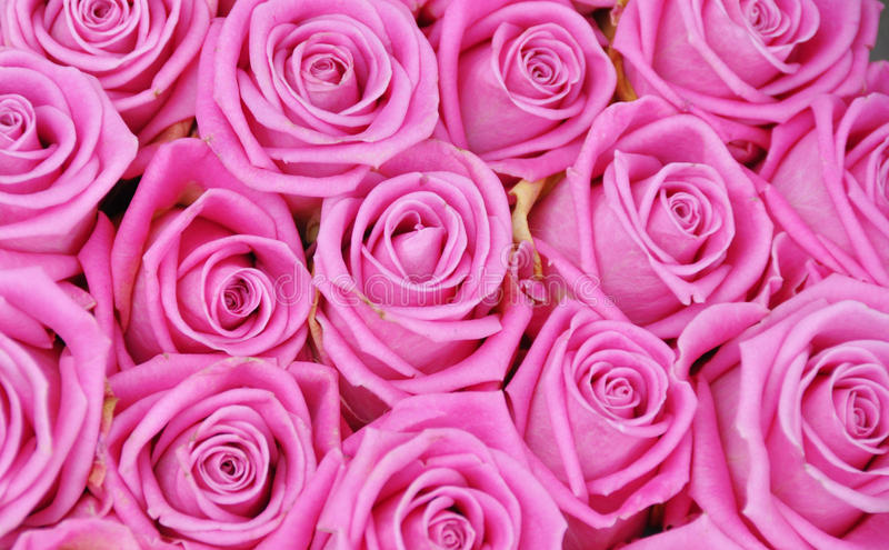 Pink roses. In a bridal bouquet royalty free stock image
