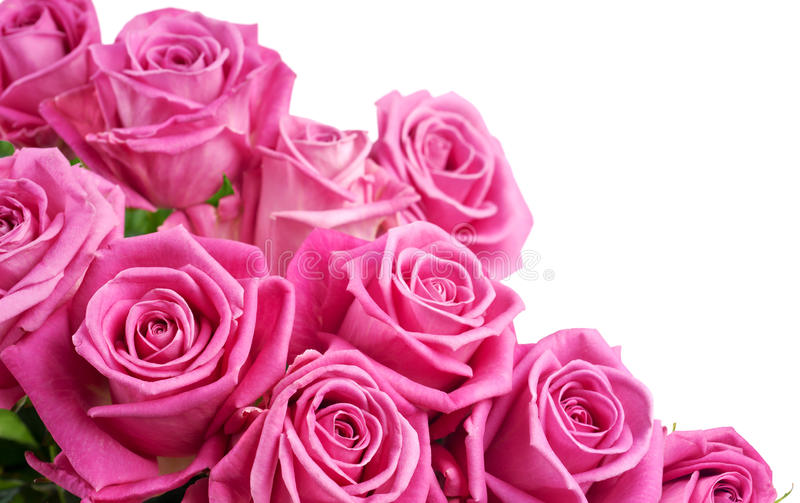 Download Pink roses stock photo. Image of group, bunch, nobody - 18292962