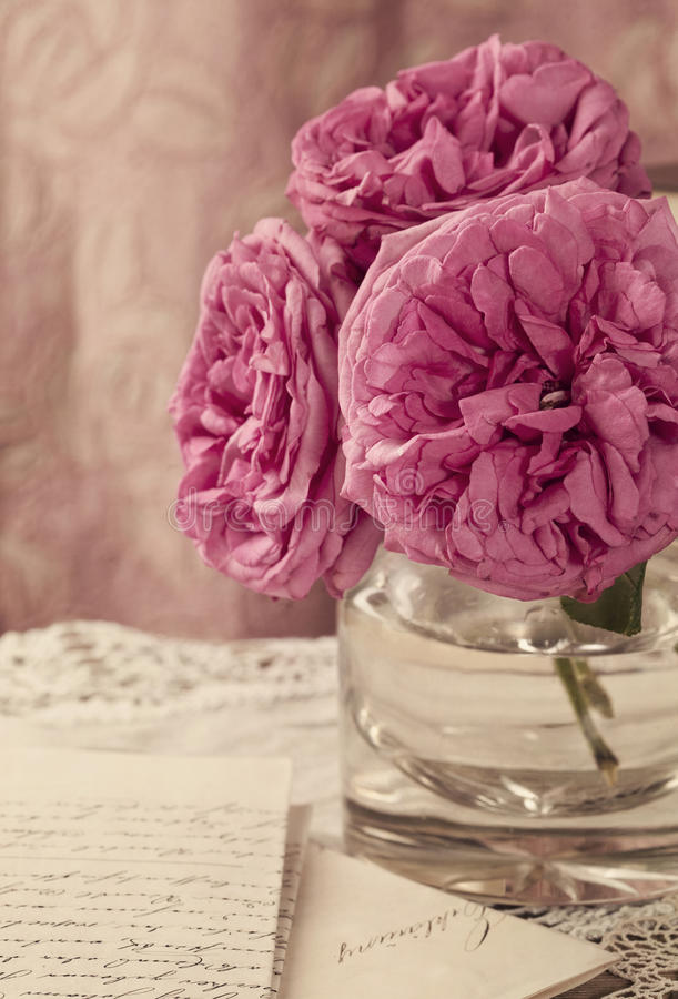 Download Pink roses stock photo. Image of books, pastel, chic - 25040226