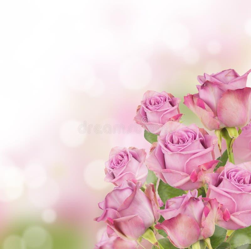 Free Pink Roses Royalty Free Stock Photo - 29996875