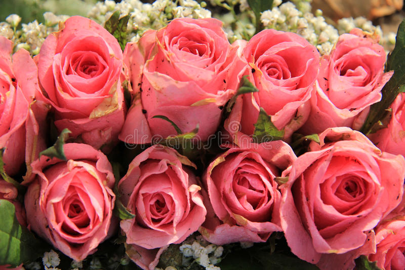 Pink roses and baby breath bouquet stock image