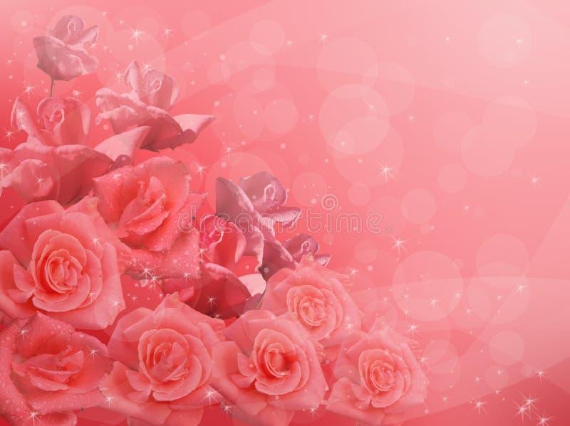 Pink roses. On a pink background vector illustration