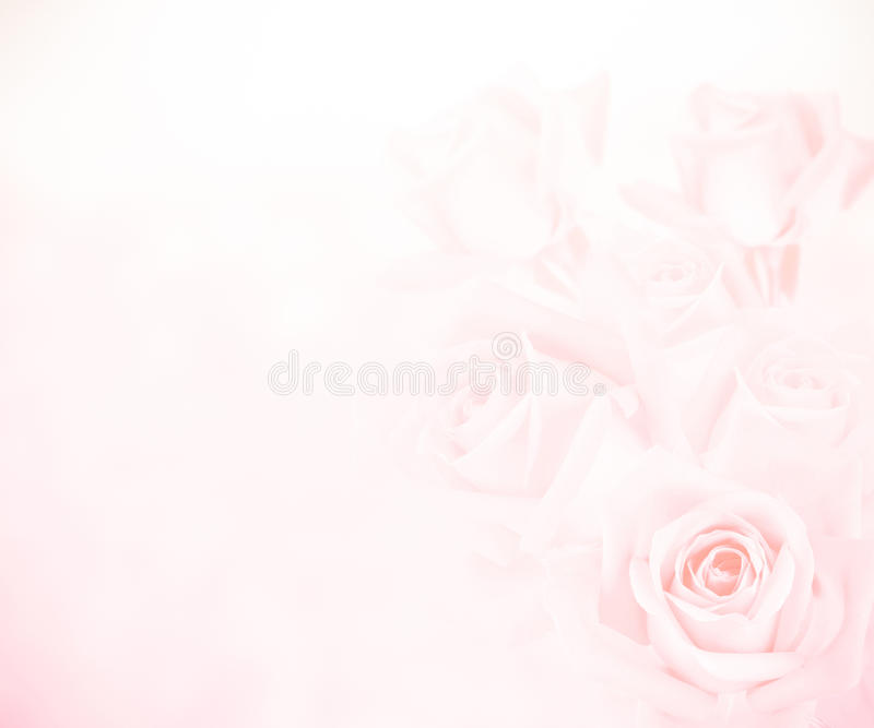Pink roses background. Beautiful pink roses for background royalty free stock photos