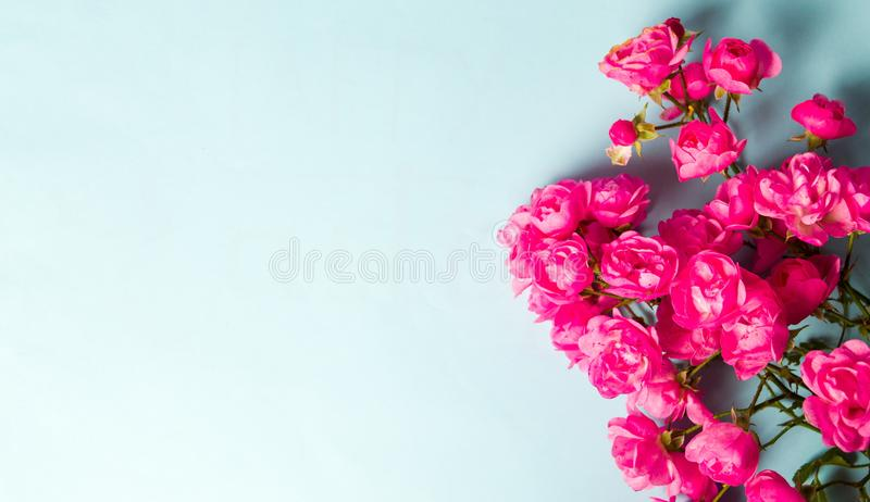 Pink roses on blue background top view. Pink roses on blue background with copy space top view royalty free stock image