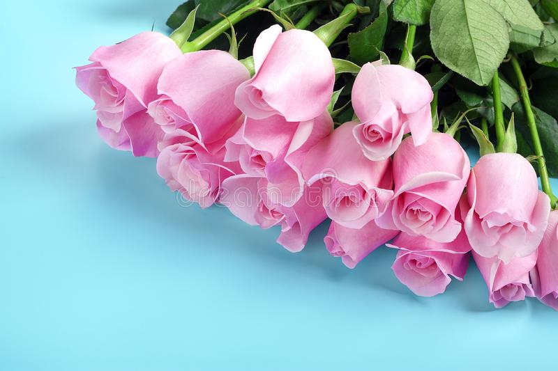 Pink roses on a blue background March 8 concept - International Women`s Day, Happy Mother`s Day, Easter royalty free stock photos