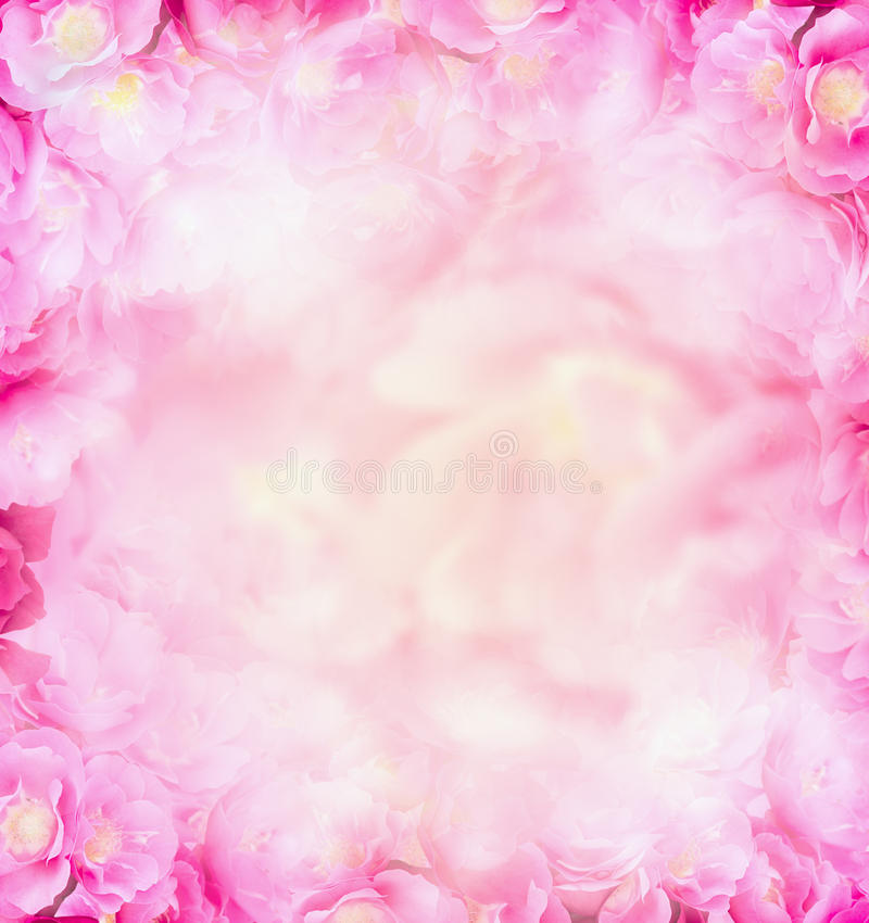 Pink roses blurred nature background royalty free stock image