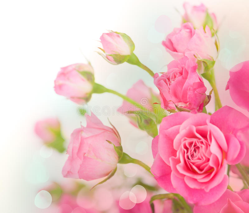 Roses. Pink roses bouquet, greeting Card royalty free stock images