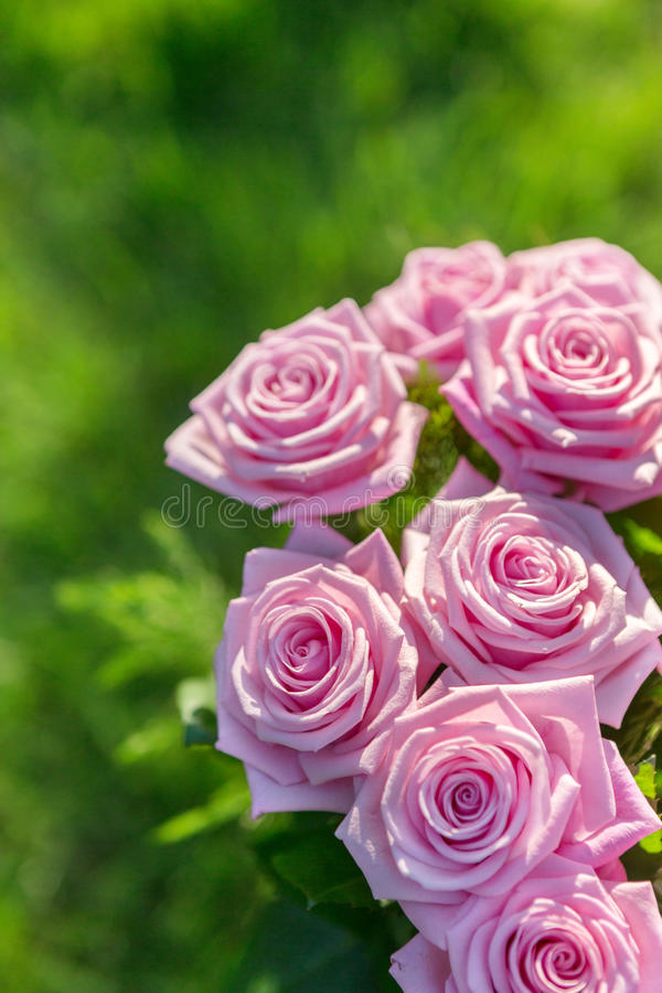 Download Pink Roses Bouquet Stock Photo - Image: 41850374