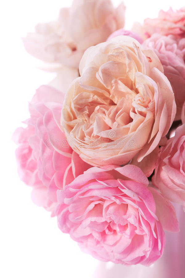 Download Pink roses bunch stock image. Image of blossom, bunch - 28146877