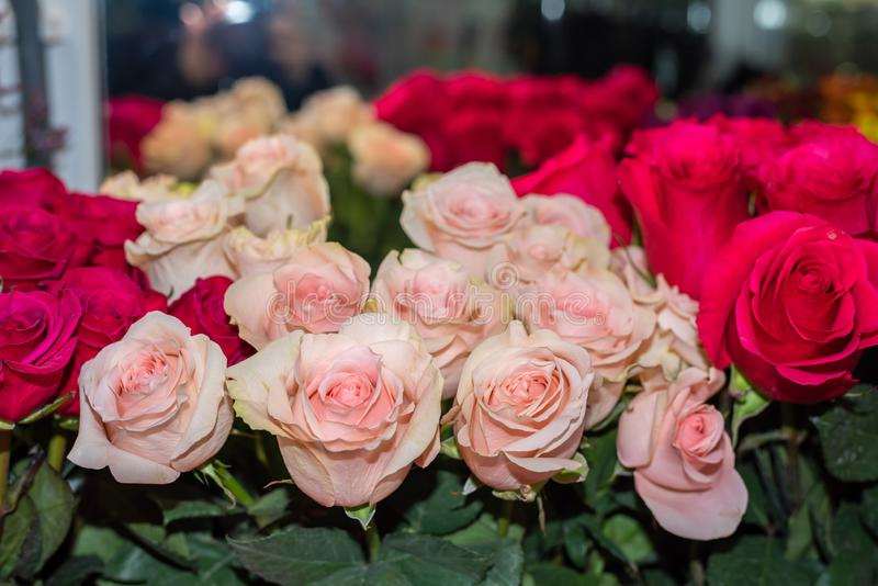 Pink roses in a flower shop. royalty free stock photography