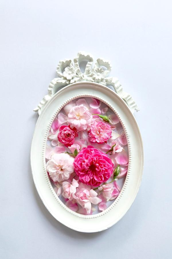 Pink roses and frames. Pink roses in vintage frames royalty free stock images