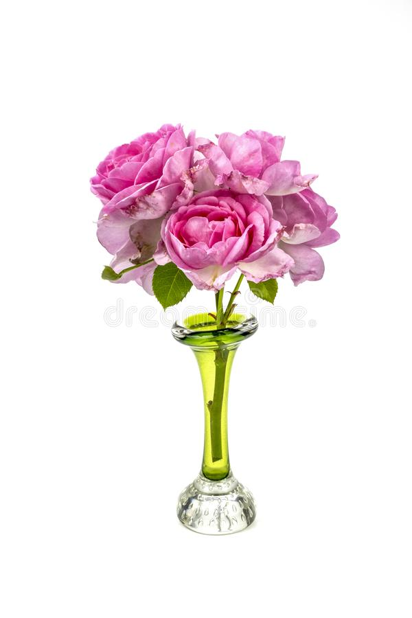 Pink roses in a green glass vase. Closeup of a a bunch of pink roses isolated on a white background sitting in a green vase stock images